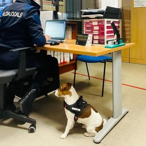 CORNEGLIANO Cani e gatti alla scrivania assieme ai loro proprietari