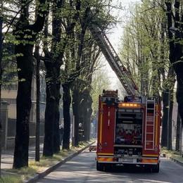 Casale, viale Cappuccini chiuso al traffico per la messa in sicurezza delle piante