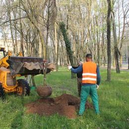 In arrivo 54 nuovi alberi a San Donato