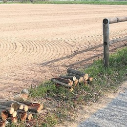 """LA LETTERA «Ciclabile danneggiata per """"fare legna"""": questo schifo non l'avevo mai visto»"""