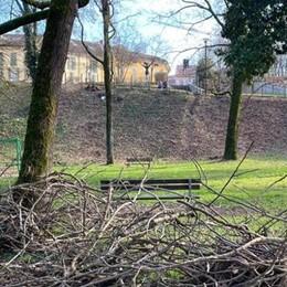 Lodi, un Piano Marshall per gli alberi
