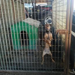 Mulazzano, sono rinchiusi in spazi troppo stretti: cani in affido