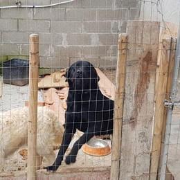 """San Zenone, nella casa uno zoo """"fai da te"""":  «Condizioni inadeguate», scatta il blitz"""