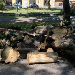 Lodi, tagliati alberi di 35 metri all'Isola Carolina - VIDEO