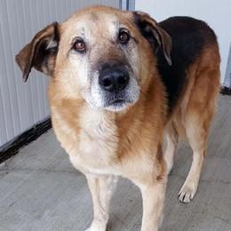 LA VICENDA Cinque cani finiti all'asta, la denuncia della Lav