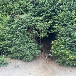 """LODI Le """"porte"""" nei tassi dei giardini del Passeggio"""