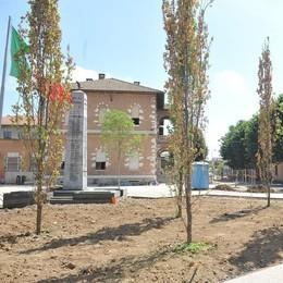 PAULLO Strage di querce nel cantiere di piazza Libertà