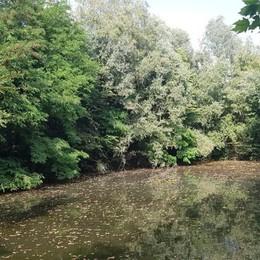 Paullo, un'oasi naturale sui terreni della logistica: «Salviamola»