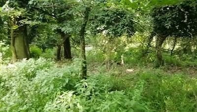 Per sentieri - anche questo silenzio c'è vicino al centro di Lodi