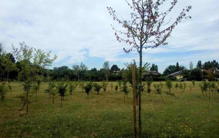 Piante morte di caldo nel bosco dell'Addetta a Dresano