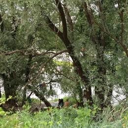 Troppi rifiuti abbandonati lungo l'Adda dopo i pic-nic