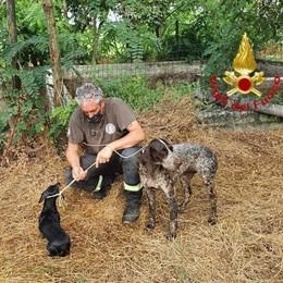 Lodi, due cani in pericolo in una cascina salvati dai vigili del fuoco