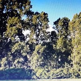 MELEGNANO «Salvate il bosco della San Carlo» L'appello di 15 cittadini al sindaco
