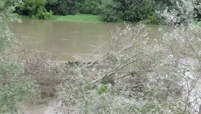 VIDEO L'Adda in piena trascina gli alberi contro le arcate del ponte