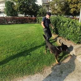 """LODI I carabinieri """"arruolano"""" il cane Harry per i controlli di Ferragosto"""