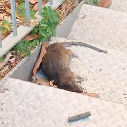 Lodi, nei palazzi Aler di via San Fereolo arrivano anche i topi