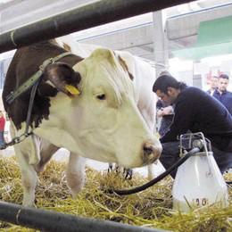Vola il prezzo del latte crudo