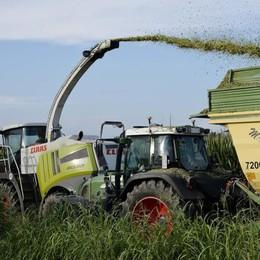 Meteo ok e prezzo in risalita: per il mais lodigiano è una buona stagione