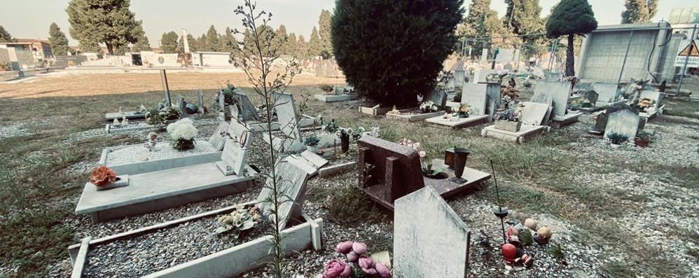 Lodi, tra sterpaglie, muffe e piccioni   il cimitero ha perso la sua dignità