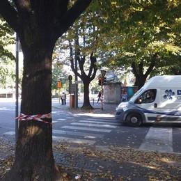 LODI Alberi di viale Dante, i cittadini sulle barricate