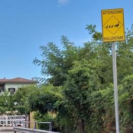 LODI Al Pratello spuntano i cartelli per tutelare l'attraversamento delle paperelle